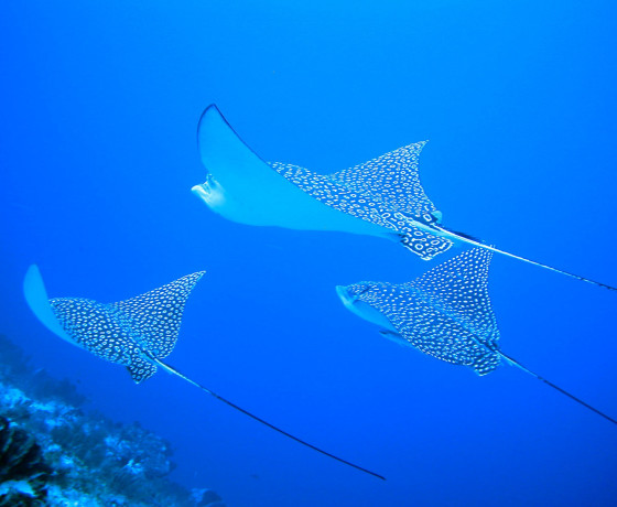 Bay adventures dive adventures and island vacations - Cozumel dive packages ...